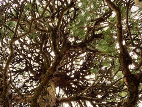 三重県津市にてお庭全体庭木のお手入れ