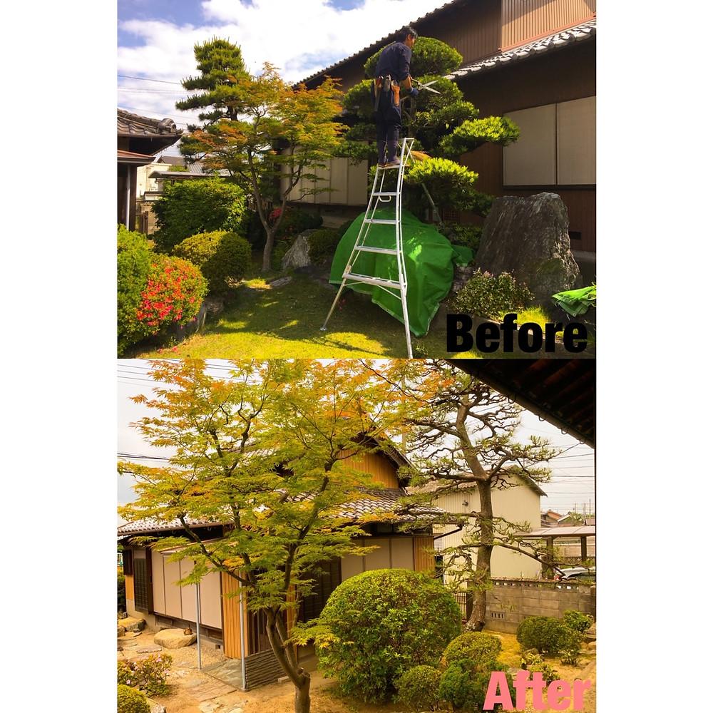 三重県川越町にて庭木の剪定