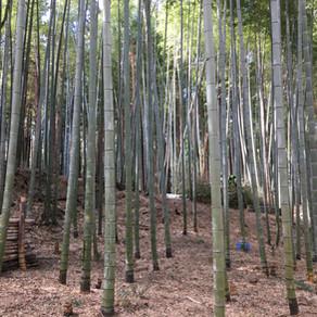 桑名市にある桑竹会さんの竹林整備に参加させてもらいました。