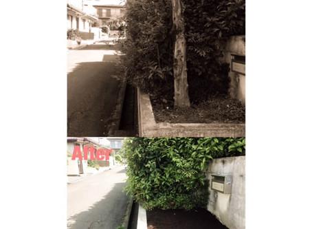 四日市市庭木抜根 ハナミズキの抜根作業