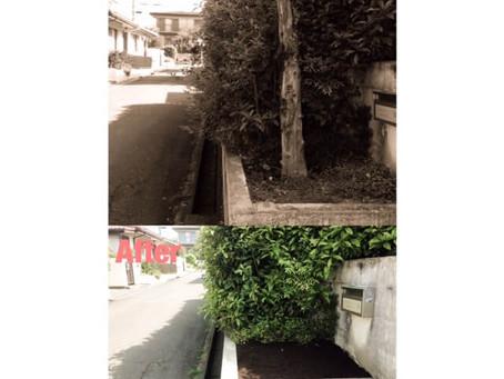 四日市市庭木抜根|ハナミズキの抜根作業
