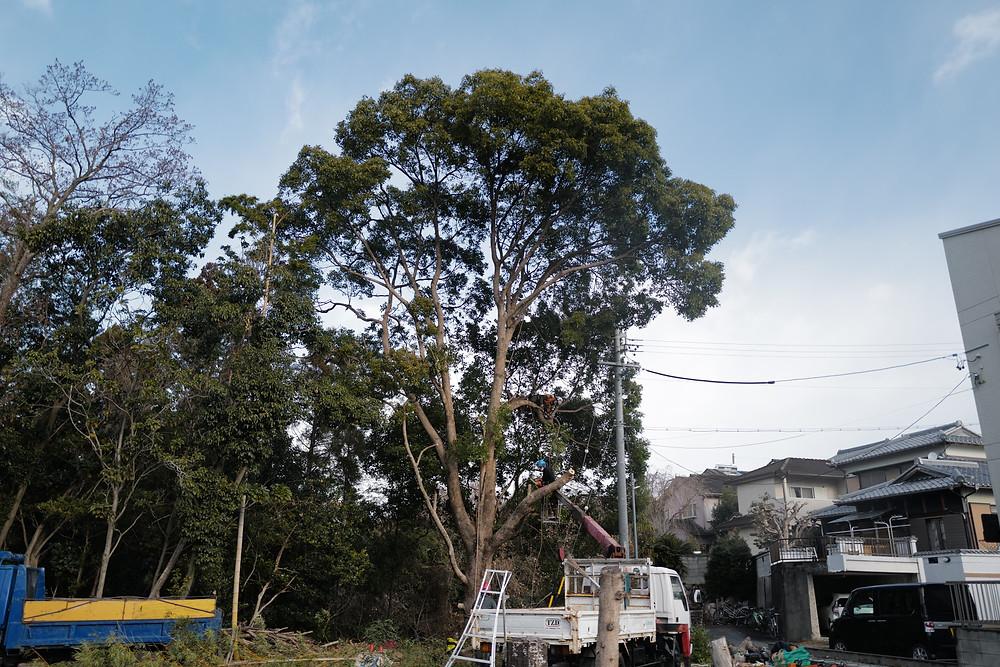 三重県四日市市にて斜面上の楠木伐採作業|三重県剪定伐採お庭のお手入れ専門店 剪定屋空