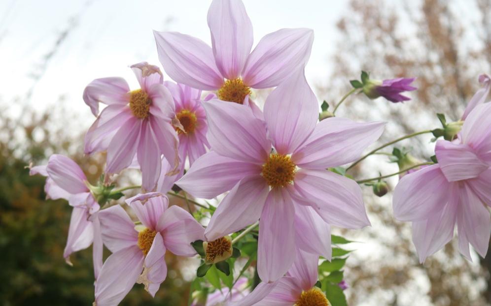 5mになるものも!美しい花で高身長なその姿はまるでモデルのよう!