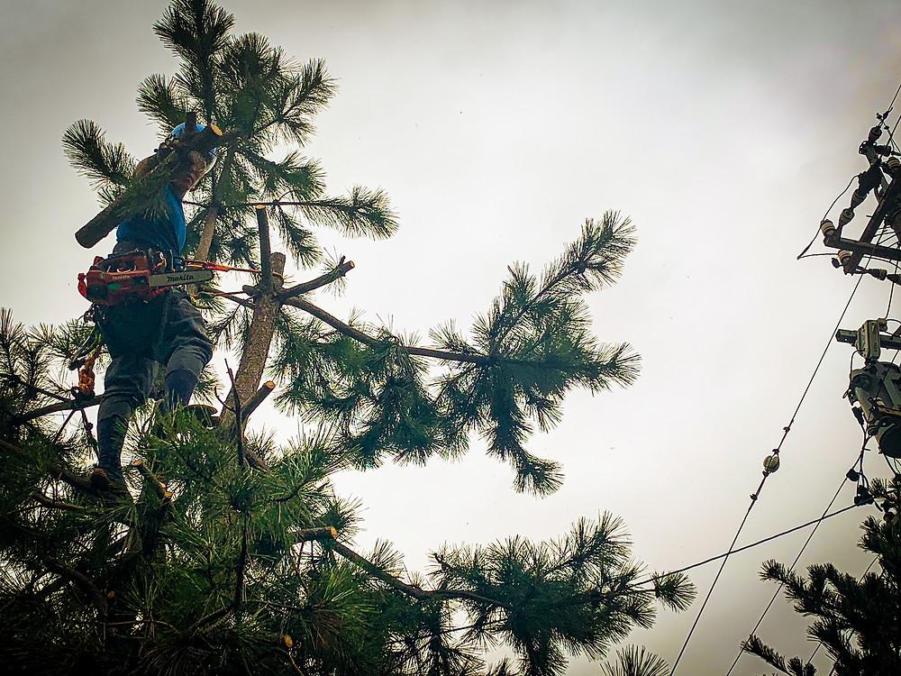 三重県で庭木の越境トラブルについて 三重県剪定伐採専門店 剪定屋空