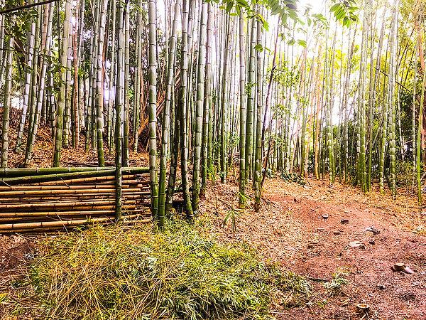 三重県 竹 伐採