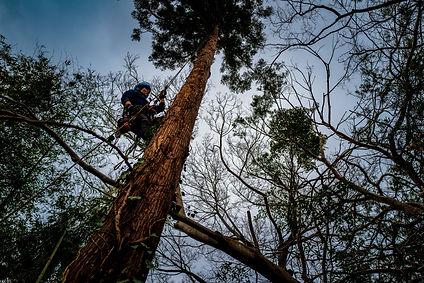 三重県で特殊伐採につ| 三重県剪定伐採専門店 剪定屋空