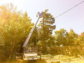 菰野町 伐採