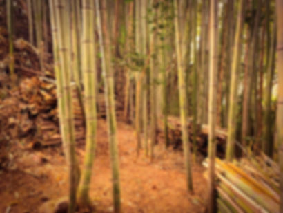 三重県  竹林整備