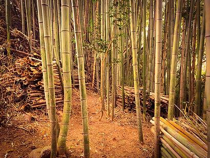 亀山市 竹林整備