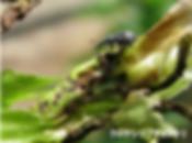 クロケシツブチョッキリ