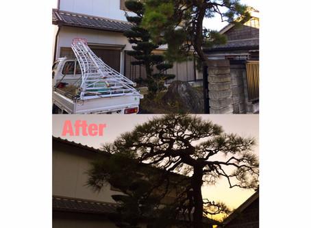 亀山市|松の剪定、槇の刈り込み作業事例
