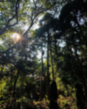 三重県 特殊伐採