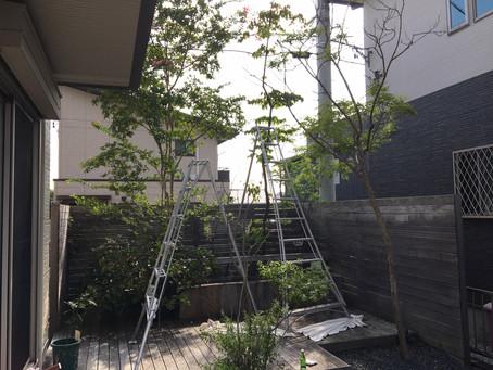 菰野町にて庭木伐採作業事例