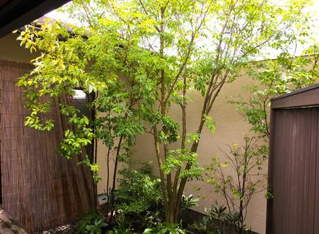 鈴鹿市剪定|中庭のお庭お手入れ庭木剪定ご依頼