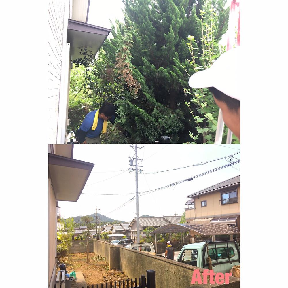 津市にて庭木間引き伐採作業|剪定屋空-sora- 三重県剪定伐採お庭のお手入れ専門店
