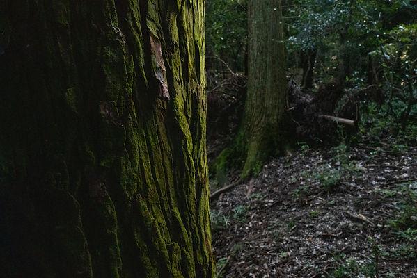 森林 問題点