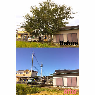 三重県で庭木伐採について|三重県剪定伐採お庭のお手入れ専門店 剪定屋空