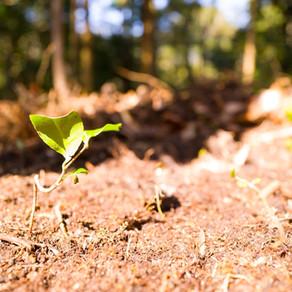 三重県地球温暖化防止活動推進員の活動をスタート|三重県剪定伐採お庭のお手入れ専門店 剪定屋空