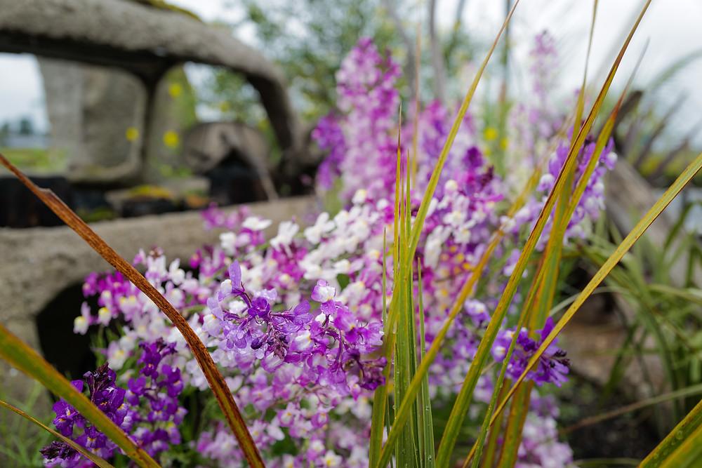 鈴鹿市 庭