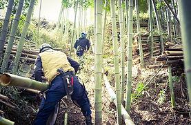 三重県 竹藪伐採