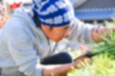三重県庭師