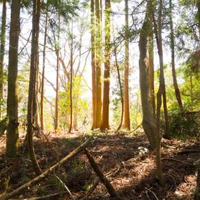 「COOL CHOICE」地球温暖化対策のために 造園業は何をできるのか?| 三重県剪定伐採お庭のお手入れ専門店 剪定屋空