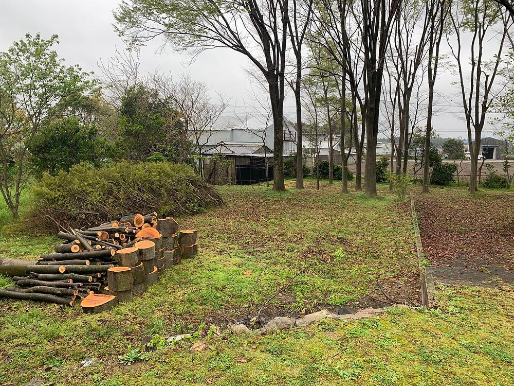 三重県四日市市にて欅の伐採作業
