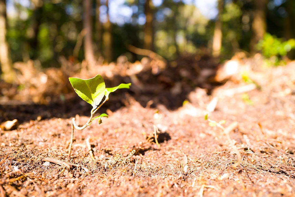 三重県で樹木の越境解決法について 三重県剪定伐採専門店 剪定屋空