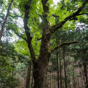 みえ森林・林業アカデミー入校式 持続可能な森林の管理と利用