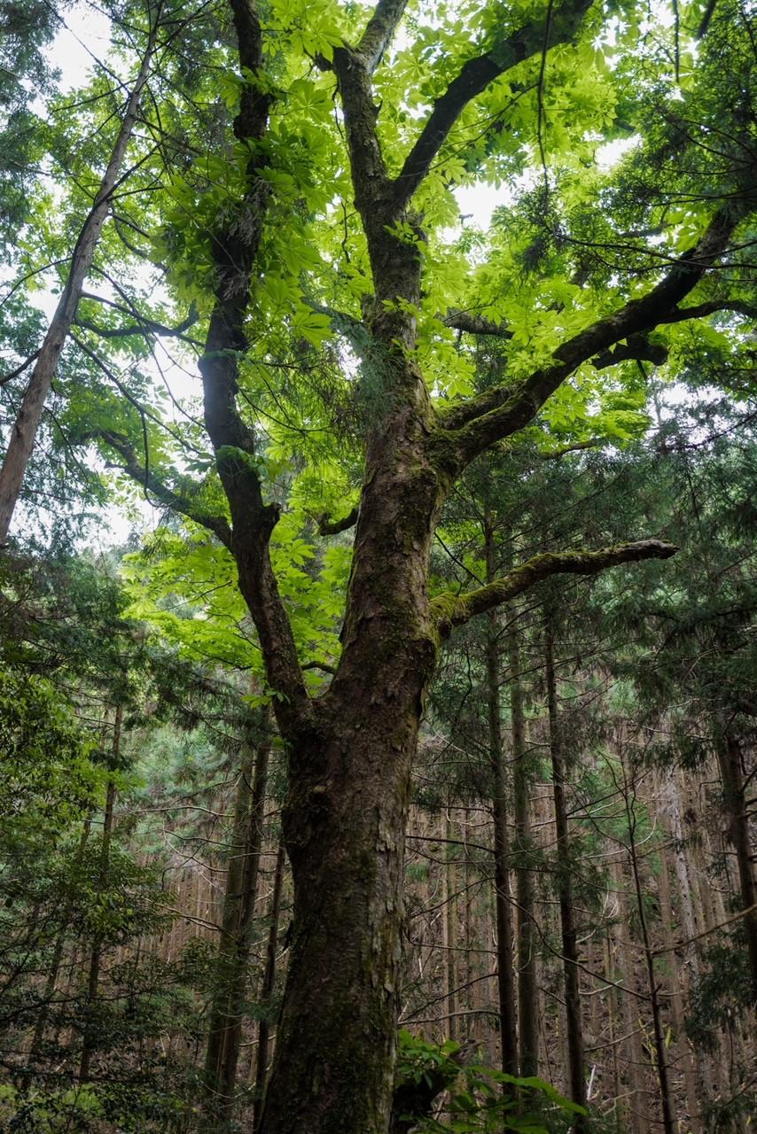 三重県みえ森林・林業アカデミー入校式 持続可能な森林の管理と利用