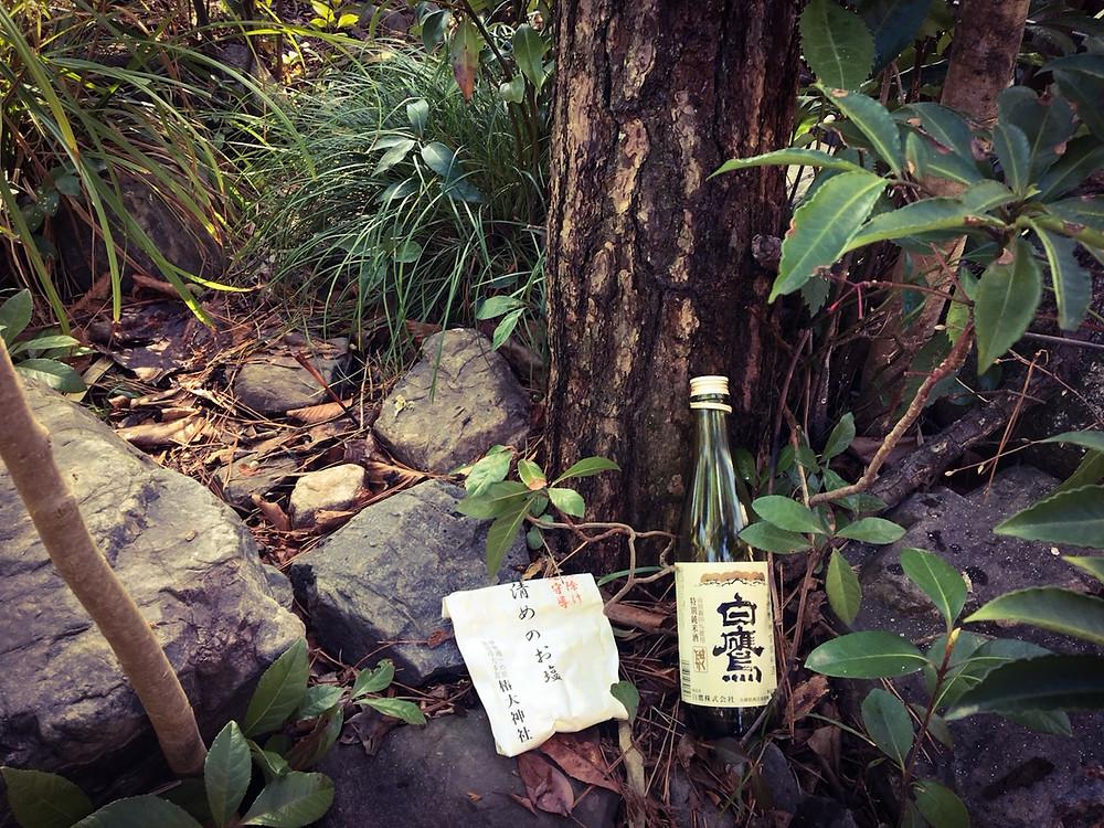 三重県菰野町にて黒松の伐採作業|三重県剪定伐採専門店 剪定屋空