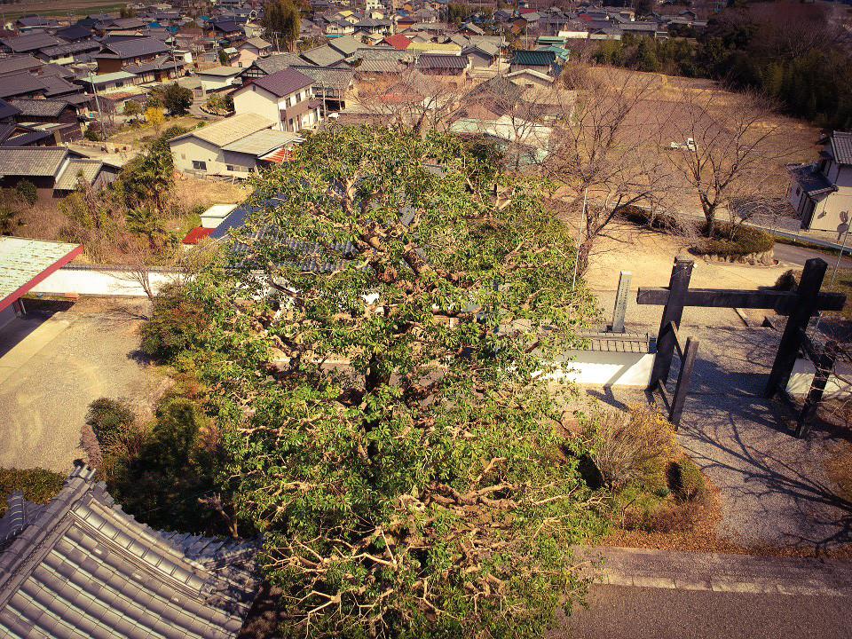 三重県 高木 剪定