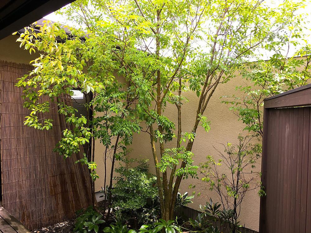 中庭のお庭お手入れ庭木剪定ご依頼