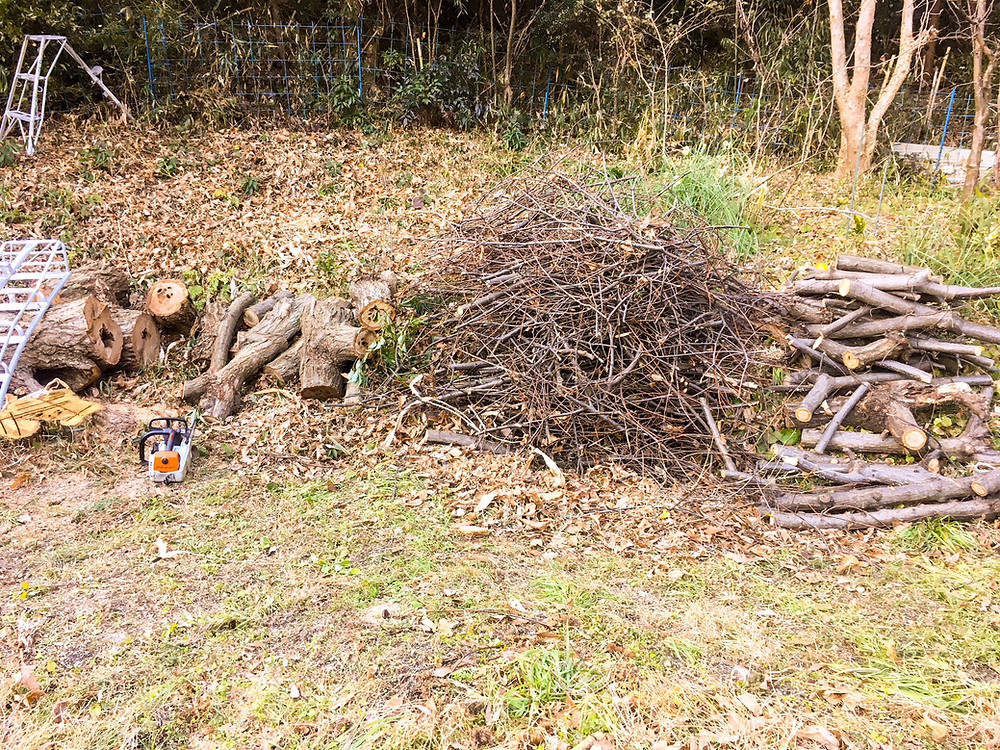 栗の木伐採作業