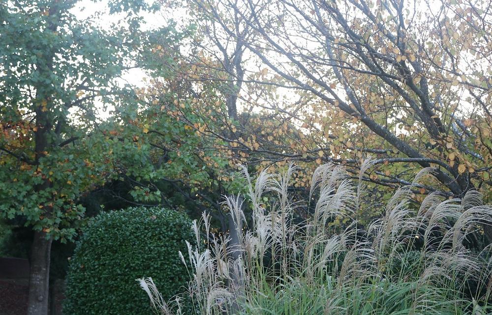 お化け!?その正体は?|三重県剪定伐採お庭のお手入れ専門店 剪定屋空