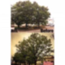 三重県 高木剪定