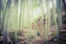 桑名市 竹林整備
