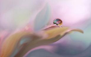 macro_photography_dew1.jpg