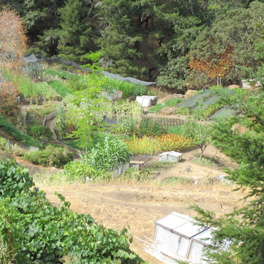 Ecology Action Mini-Farm During Record Drought