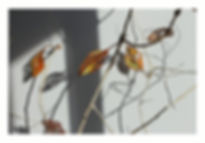 Autumn stitch (Large).JPG