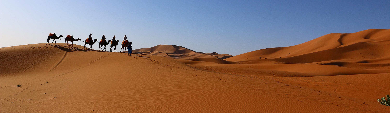 CAMEL TREK IN SAHARA DESERT