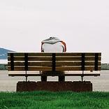 alone-bench-grass-66757.jpg