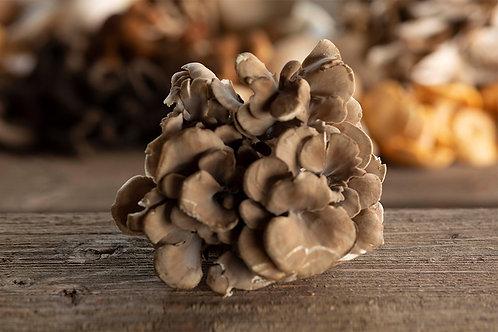 Fresh Maitake Mushrooms