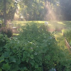 Morning Watering