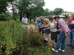 Group observing plants