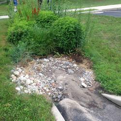 Rain Garden with Sediment