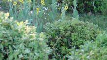 Mon jardin autrement
