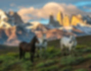 PATAGONIA PICTURES-42.jpg