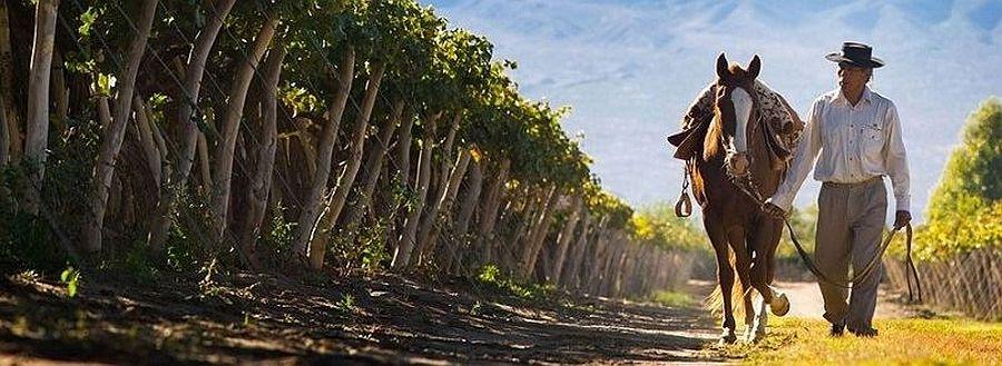 wine-tours-cafayate-gaucho-vineyards.jpg