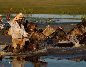 Pantanal Trail Ride Safari, Brazil